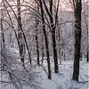 Cambridge NY Woods at Sunset Lane 2 2008