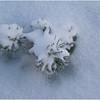 Cambridge NY Twig in Snow 2008