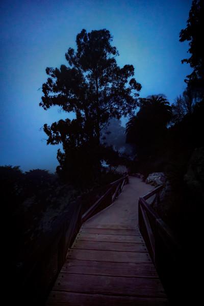 McWay-Falls-night-path