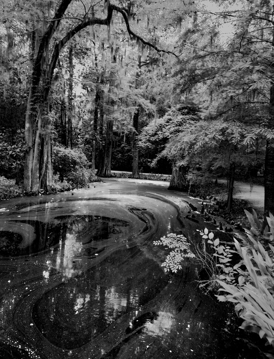 Swamps of Magnolia Plantation in South Carolina with Intentionally Lost and Kevin Wenning #intentionallylost