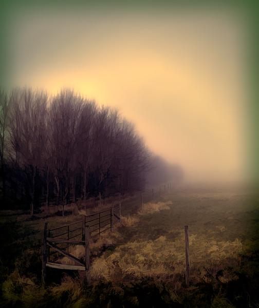 20170402_KW_LN_Moody_Trees_In_The_Mist
