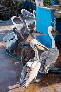 Puerto Ayora, Santa Cruz Island, Galapagos