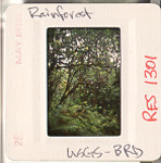 res001301_tn_slideborder