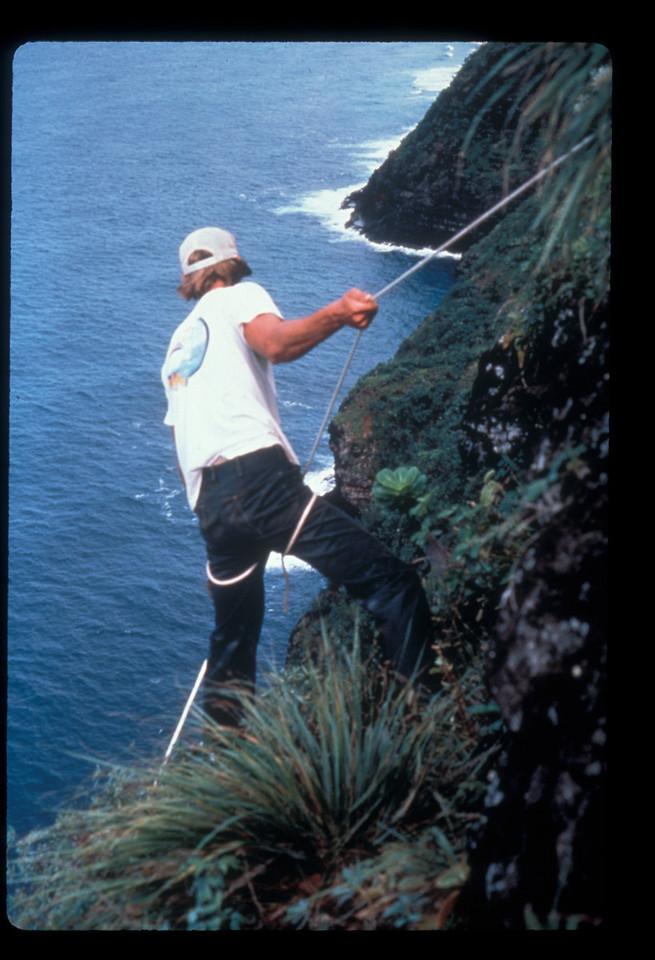 Chipper Wicheman; Brighamia seed collecting, Hoolulu Valley, Kauai