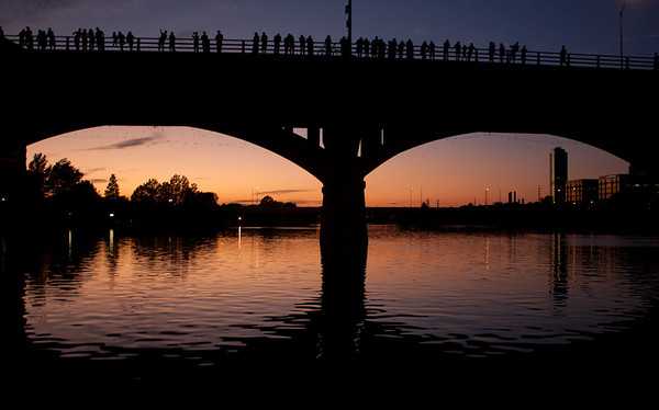 Spectators on South Congress Bridge in Austin awaiting the emergence of millions of Mexican free-tailed bats.