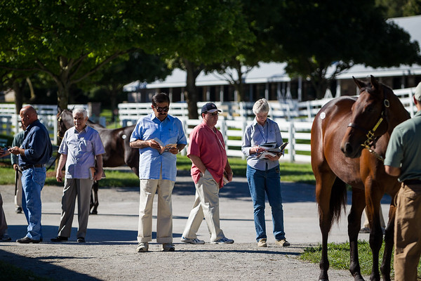 Sheikh Hamdan, with Rick Nichols (left), Kiaran McLaughlin (pink) and advisors, inspect a yearling consigned by Clearsky Farms 9.10.2012