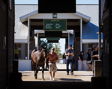 Buyers, Yearlings and Workers at the Keeneland Sales, 9.11.2012
