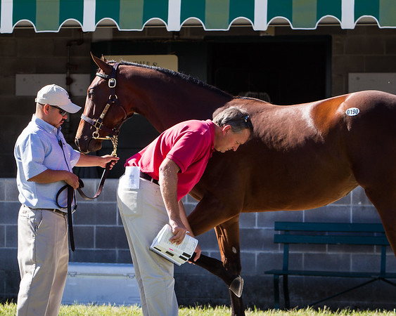 Doug Cauthen inspects a yearling at Keeneland 9.11.2012