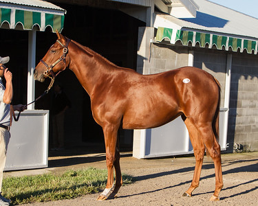 Hip 248 Distorted Humor/Rolling Sea '11 filly