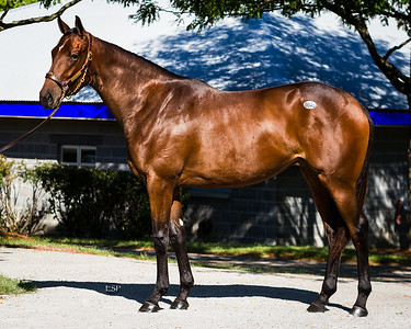 Hip #45 - SmartStrike-UntouchedTalent '11, becomes the Sales topping filly.