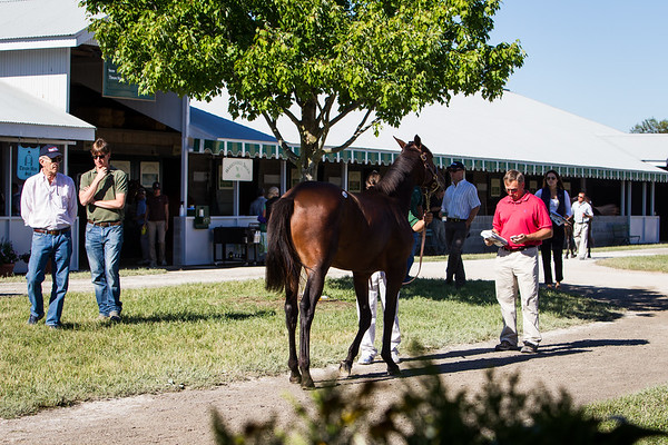 Doug Cauthen inspects a yearling as  Governor Brereten Jones and Bret Jones look on.