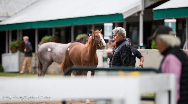 Scene at the Keeneland Yearling Sale 9.10.18