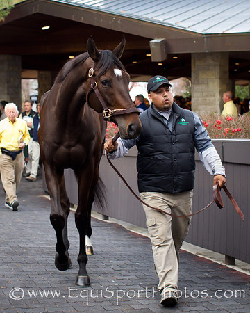 Royal Delta walks to the Sales Ring at Keeneland 11.08.2011