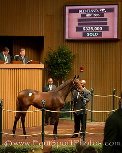 Hip 305 - dark bay or brown filly by Bernardini out of Colonial Ally.  Sold for $325,000 at Keeneland on 11.08.2011