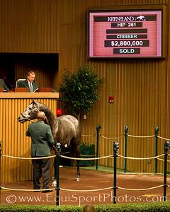 Unrivaled Belle, Hip 261, at the Keeneland November sale on 11.08.2011