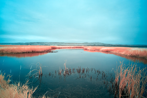 Benson Pond At Malheur National Wildlife Refuge - Oregon