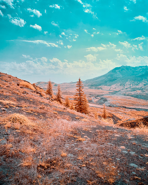 Trees Returning To Mount St. Helens