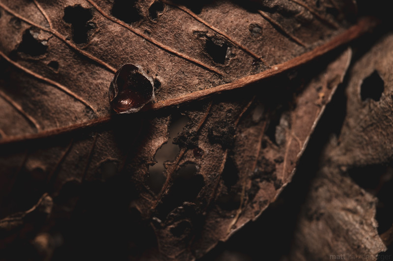 Leaves in Decay