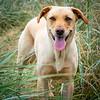#hayley #gooddog #greatdog #labsofinstagram