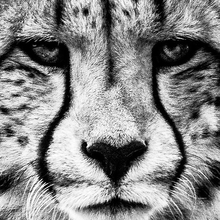 What are the considerations for wildlife photography? Patience?  Patterns? Expensive kit?  Great discussion today with Arran High School Higher photography students about where and how to find tips and tricks.  Lots of talent evident in the group, I'm sure they'll do well.
