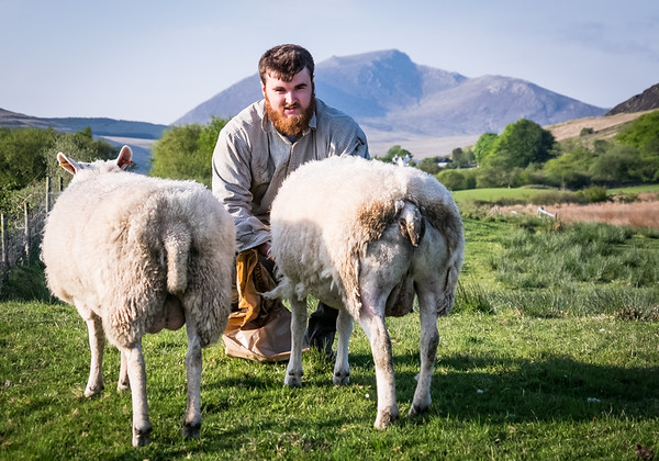 Another one from a  #sheep #farm #farming shoot with Wallace @wallace2612 @rural2kitchen and @liamtakespics back in May this year.