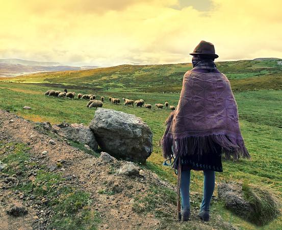 Latacunga Sheepherder
