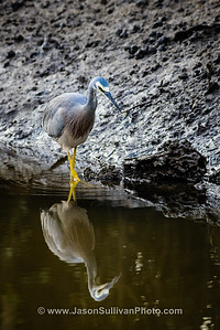 Heron Reflection