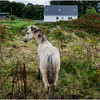 Ireland County Galway Galway Bay Furbogh 10 September 2017