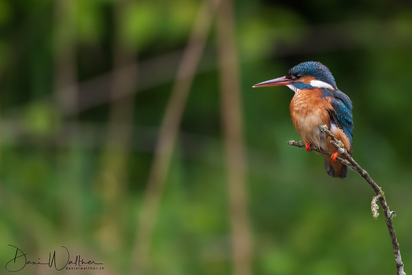 Our Kingfisher