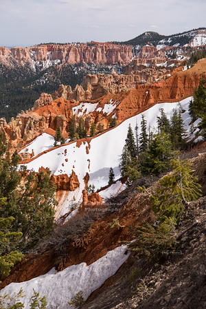 Ponderosa Point at Bryce Canyon