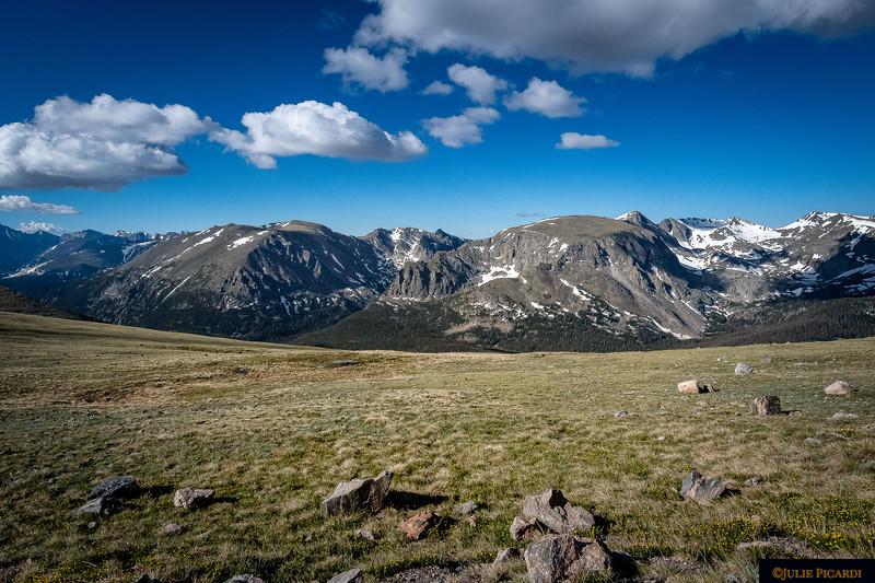 Alpine Meadow in Rocky Mountain National Park