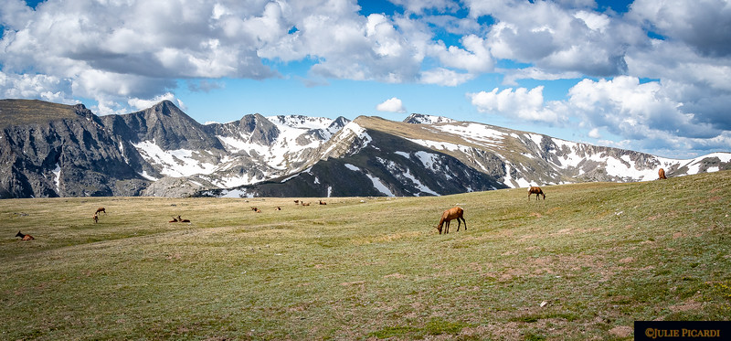 Elk in the Highlands