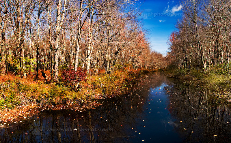 Autumn Stream in Maine