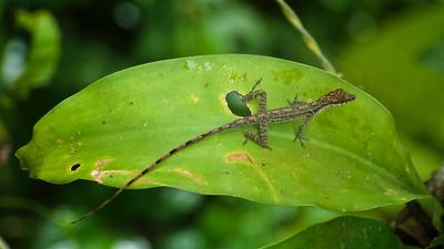 ¿Lizard?