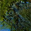 Rensselearville  NY June 2015 Riffles in Lake Creek 3