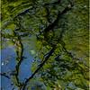 Rensselearville  NY June 2015 Riffles in Lake Creek 2