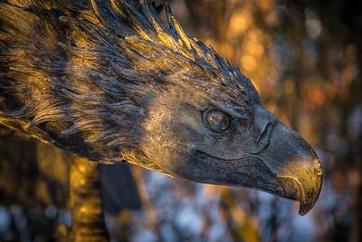 Eagle's Eye