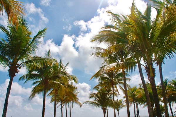 Bahamas' Sky