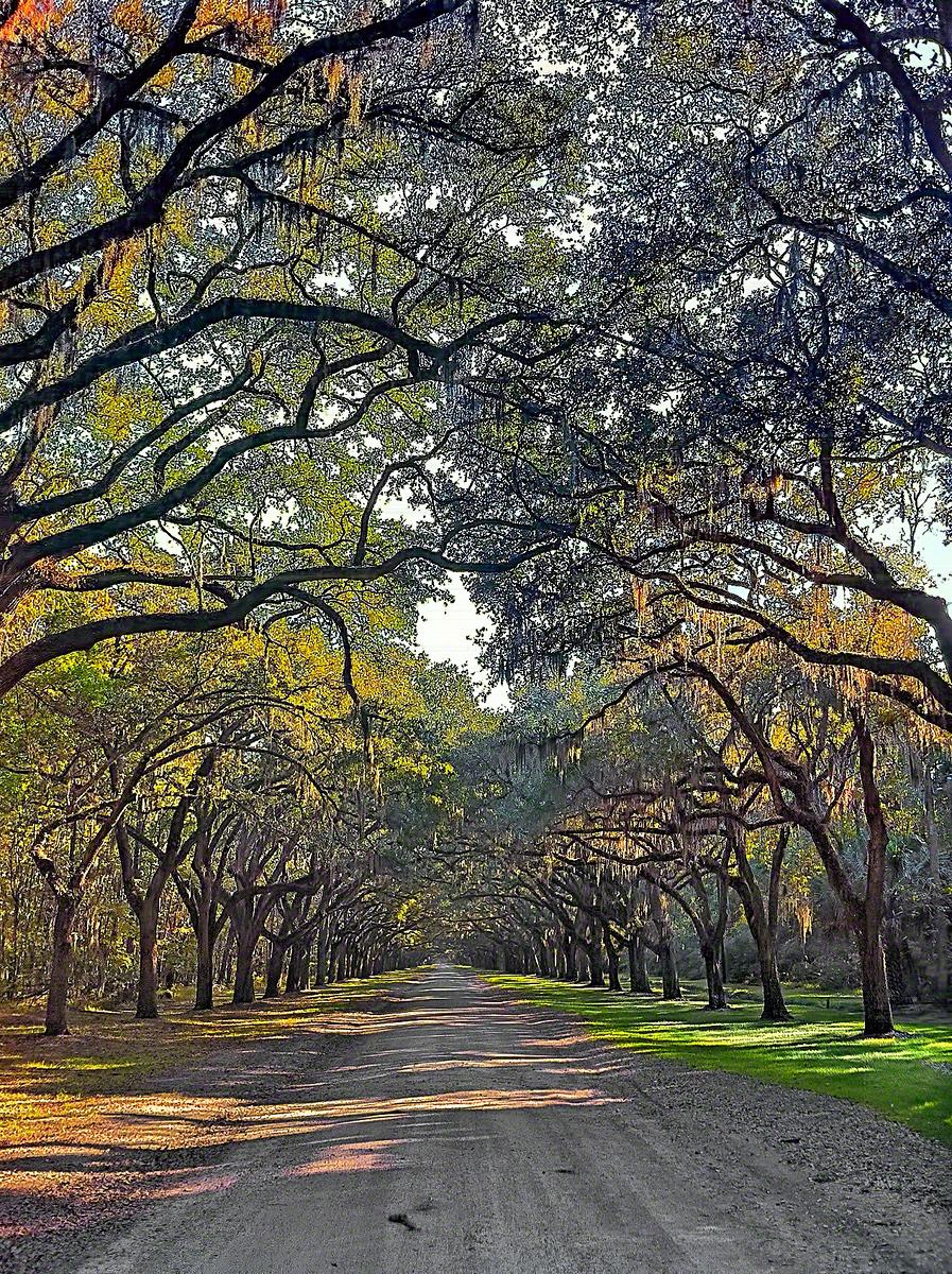 Oak Tree covered lane at Wormsloe Plantation in Savannah Georgia