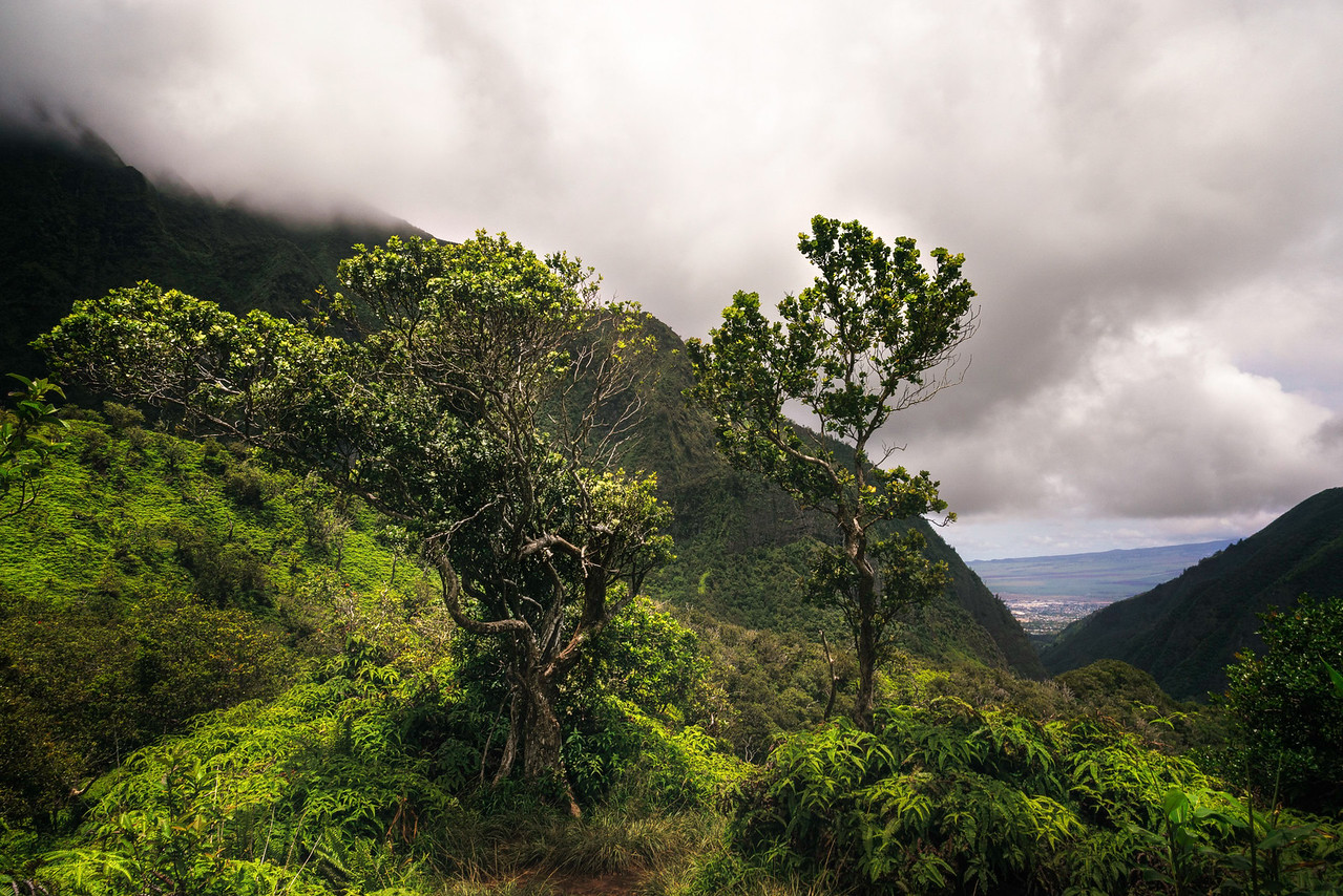 Iao Valley hiking trail in Mau with Intentionally Lost and Kevin Wenning #intentionallylost
