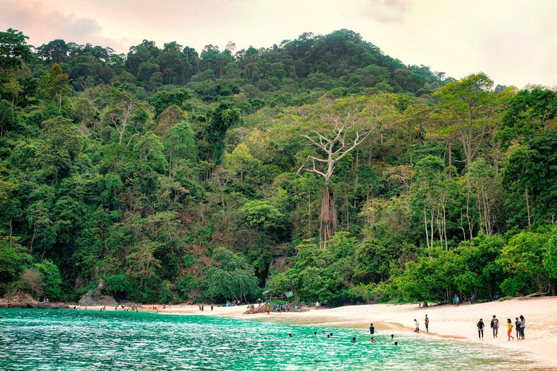Green Bay Beach Icon and Jungle.jpg