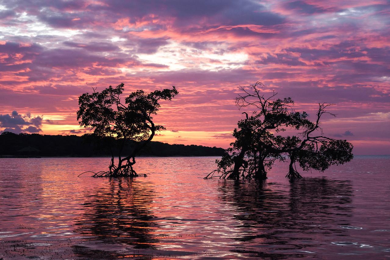 Roatan Mangroves Sunset