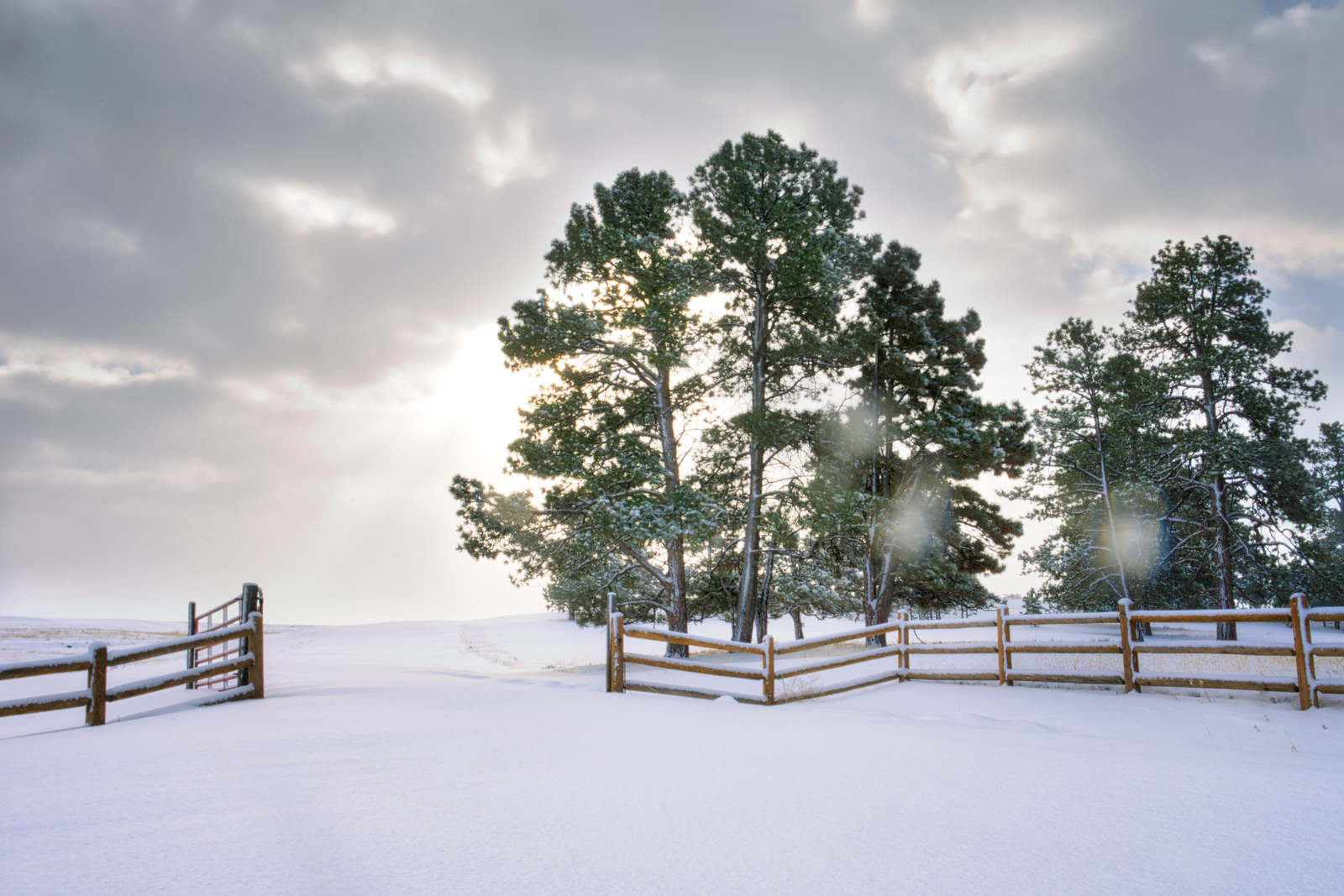 Snowy Pasture Photograph in Northern Colorado