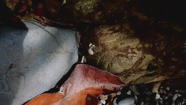 Hermit Crab Osa, Costa Rica February 2021
