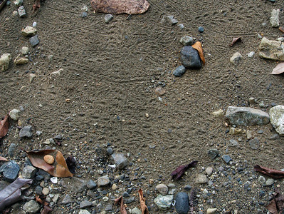 tracks vary due to different shells and size of hermit crabs