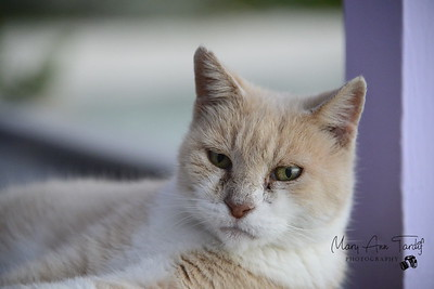 Mooch, the Staniel Cay Yacht Club cat