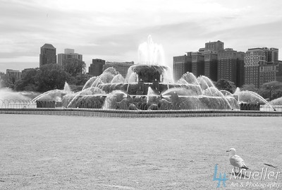Buckingham Fountain Seagull