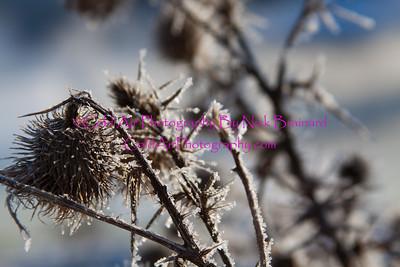SMPLS_FrostBurr.jpg