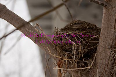 SMPLS_Nest_MendotaBridge.jpg  This abandoned bird nest below the Mendota Bridge on Pike Island was most likely a very noisy house.