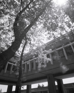 Simon Fraser University TMAX 400, 4x5 Wooden pinhole camera